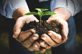 Tree and Shrub Fertilization and Soil Management