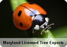Maryland Licensed Tree Experts